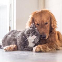 Jak zdrowo i tanio nakarmić psa lub kota?