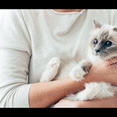 Ile kosztuje utrzymanie kota? Lista wydatków