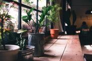 Zioła – kupować w doniczkach czy sadzić samodzielnie?